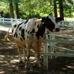 2013年夏のするっと関西3Dayチケット3日目「六甲山牧場・高山植物園」ぶらり旅