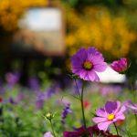 ガーデンミュージアム・びわ湖絶景ぶらり旅