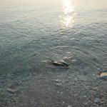 会社イベントで和歌山県地ノ島へ海水浴。ぶらり旅