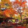 するっと関西3dayチケットを使って1日目は神護寺と清滝へぶらり旅