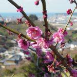 春の青春18切符企画第1回「和歌山県・南部梅林」ぶらり旅
