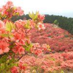 葛城山のツツジを見に・・・ぶらり旅