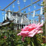 おふさ観音と明日香村観光ぶらり旅