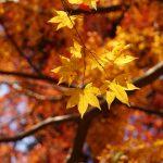 奈良県談山神社・三重県香落渓ぶらり旅