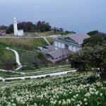 冬の関西1Dayパスを使って福井県・越前岬水仙ランドへぶらり旅