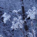 大阪府・奈良県境金剛山へ樹氷を見にぶらり旅