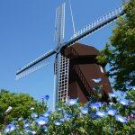 しんあさひ風車村とびわ湖バレイへ花散策ぶらり旅