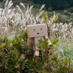 葛城高原へダンボーとすすきを見に散策ぶらり旅