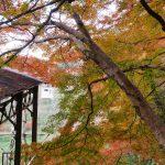 紅葉狩り第4弾・吉野山の紅葉巡り散策ぶらり旅
