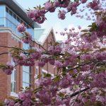大阪造幣局桜の通り抜け散策ぶらり旅
