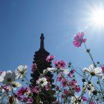 α6000で撮った奈良般若寺のコスモス寺散策ぶらり旅