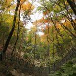 α6000で撮った箕面の滝へ紅葉狩りに散策ぶらり旅