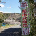 和歌山県紀州みなべ「岩代大梅林」へ散策ぶらり旅