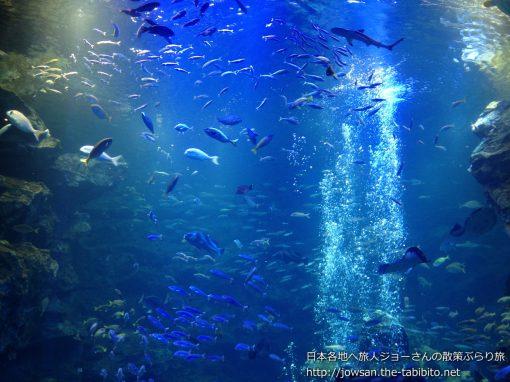 2012-03-27 京都府_京都水族館