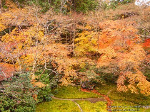 2012-12-02 京都府_瑠璃光院「紅葉」