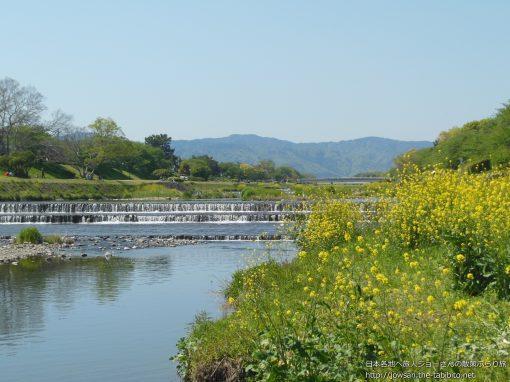 2013-04-28 京都府_鴨川