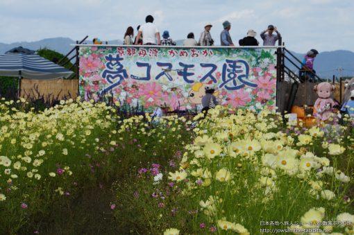 2013-10-13 京都府_夢コスモス園