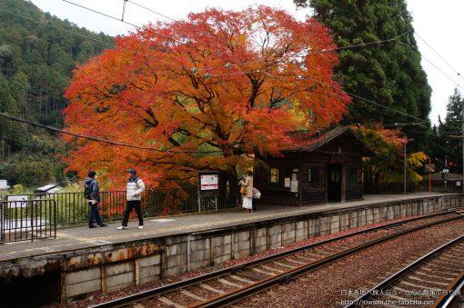 2013-11-27 京都府_二ノ瀬駅「紅葉」