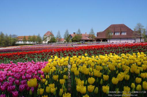 2014-04-23 滋賀県_農業公園ブルーメの丘「チューリップ」