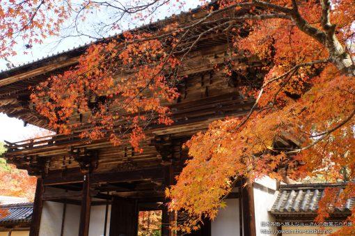 2014-11-16 京都府_神護寺「紅葉」