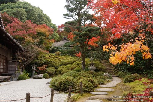 2014-11-19 京都府_金福寺「紅葉」