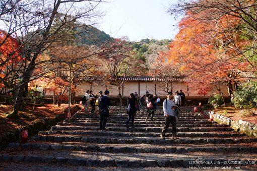2014-11-30 京都府_二尊院「紅葉」