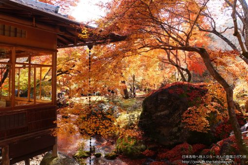 2014-11-30 京都府_宝厳院「紅葉」