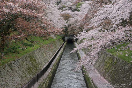 2015-04-08 滋賀県_琵琶湖疏水