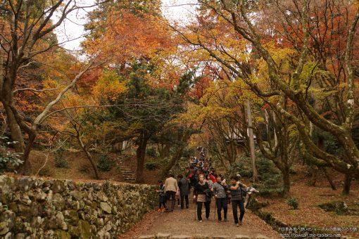 2015-11-22 滋賀県_鶏足寺