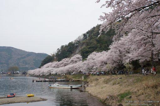 2016-04-10 滋賀県_海津大崎の桜