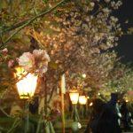 仕事帰りにOLYMPUS AIR A01で撮った造幣局 桜の通り抜けライトアップ2016散策ぶらり旅