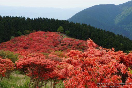 2014-05-18 奈良県_葛城高原自然つつじ園