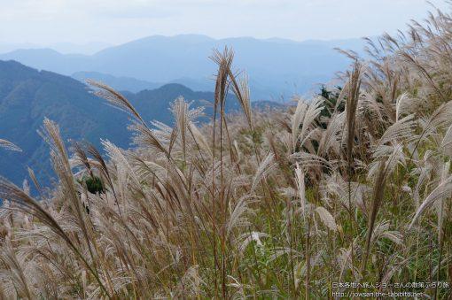 2014-10-15 奈良県_葛城高原自然すすき園