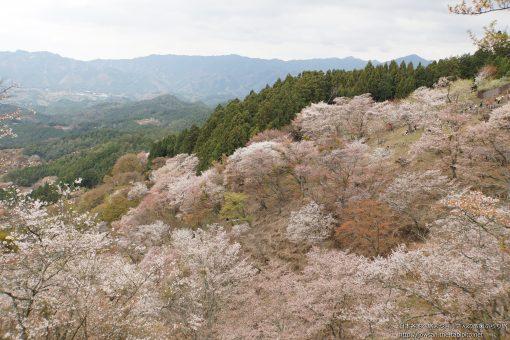 2015-04-12 奈良県_中千本公園