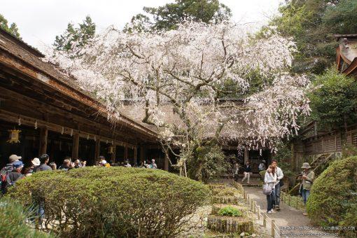 2015-04-12 奈良県_吉野水分神社「桜」
