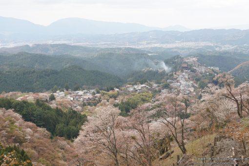 2015-04-12 奈良県_花矢倉展望台「桜」