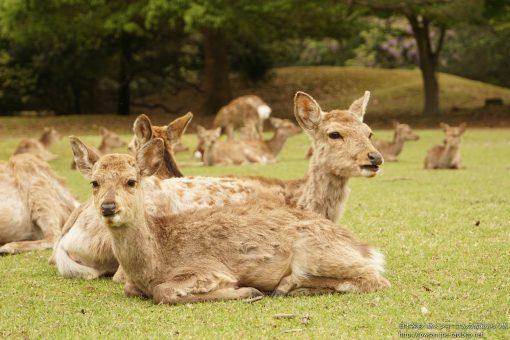 2015-04-29 奈良県_奈良公園