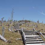 暑い時こそ大台ヶ原一周約7kmにチャレンジしよう。いい汗かきますよ!写真は途中の正木ヶ原