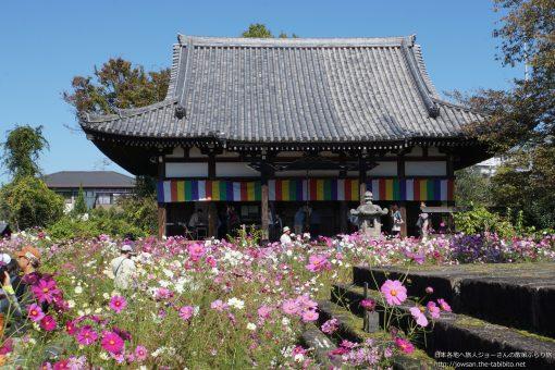 2015-10-18 奈良県_般若寺コスモス寺