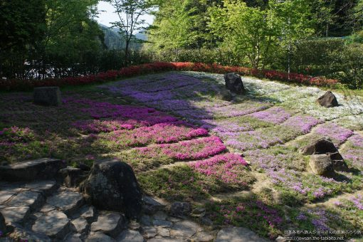 2016-05-01 奈良県_花の郷滝谷・芝桜