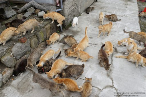 2015-05-04 愛媛県_青島「猫」