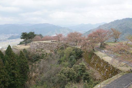 2016-04-13 兵庫県_竹田城跡・桜