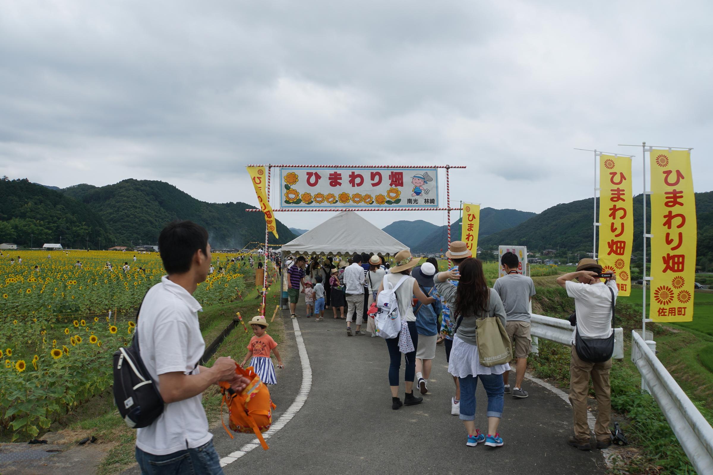 3年ぶりに兵庫の佐用町ひまわり祭りに散策ぶらり旅