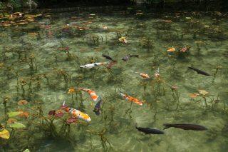 初祝日「山の日」は根道神社・名もなき池(モネの池)を見に散策ぶらり旅
