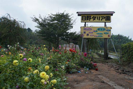 花の郷 日野ダリア園