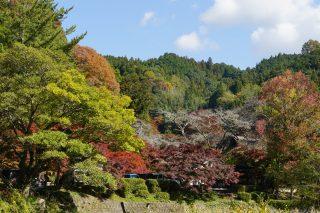 愛知県豊田市足助町の「香嵐渓もみじまつり」へ散策ぶらり旅