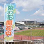 神戸総合運動公園「コスモスの丘」に咲く5万本の菜の花を見に散策ぶらり旅