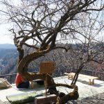 奈良の月ヶ瀬梅渓花まつり「名勝・月瀬梅林」散策ぶらり旅