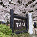 京都・桜の名所「哲学の道」から「蹴上インクライン」へ散策ぶらり旅