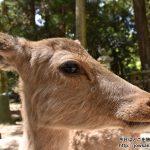 国内最古・最大級の春日大社神苑 萬葉植物園「藤の園」へ散策ぶらり旅